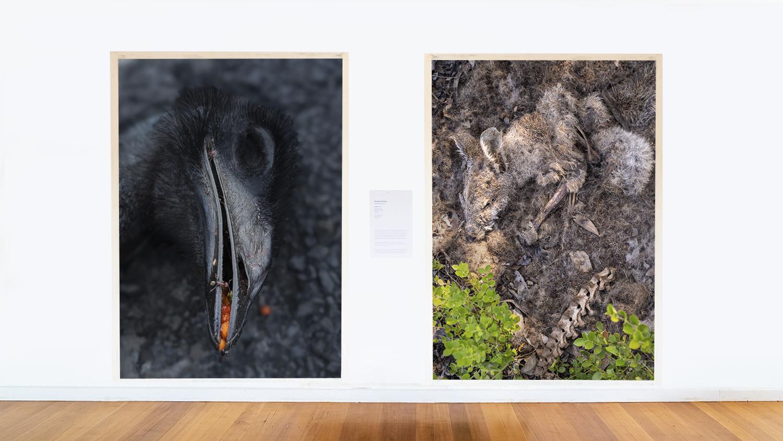 Death on the Street exhibition, 2021, Natimuk, Victoria, Australia